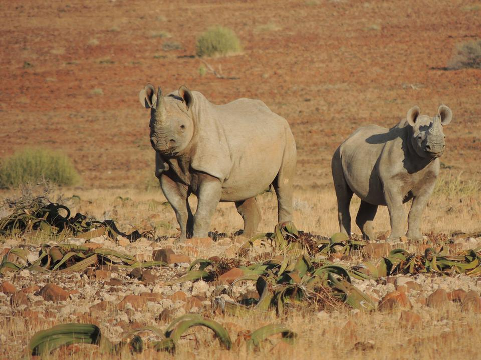 Government Calls on Namibians to Assist inFight againstPoachers – Reward Doubled