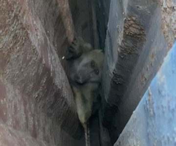 Baboon on the loose at container depot